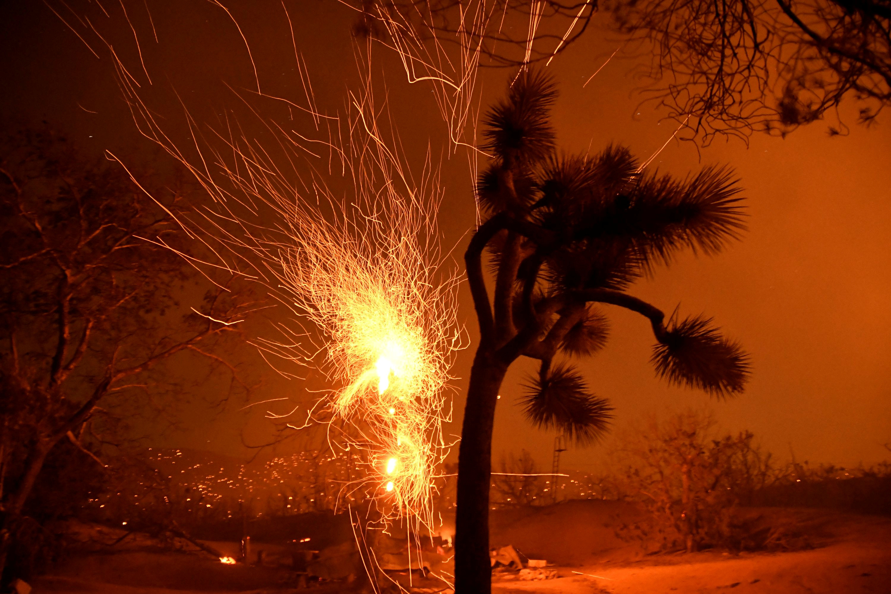 Winds blow flying embers from a burning tree at the Bobcat Fire in Juniper Hills California
