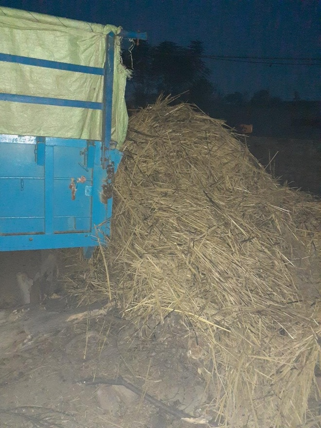 Rain after paddy harvesting leaves farmers worried