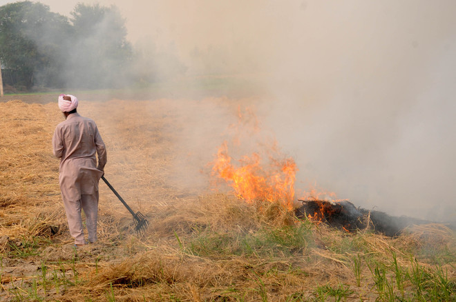 5,549 stubble burning cases reported in city