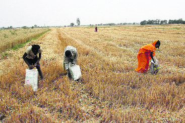 Farmers seek relief for basmati growers for not burning stubble
