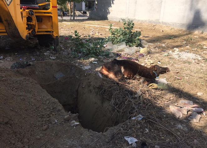 MC staff's bid to bury carcass in residential area draws ire