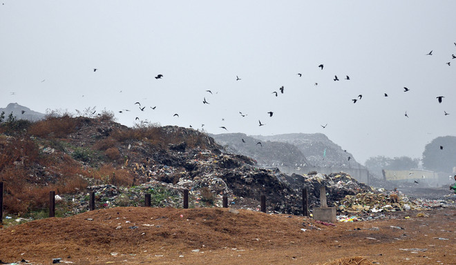 Despite NGT orders, MC fails to start garbage remediation
