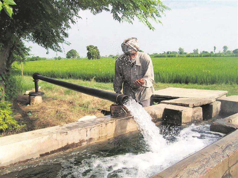 Delay paddy sowing, meet water demand for 3.5 years: Panel