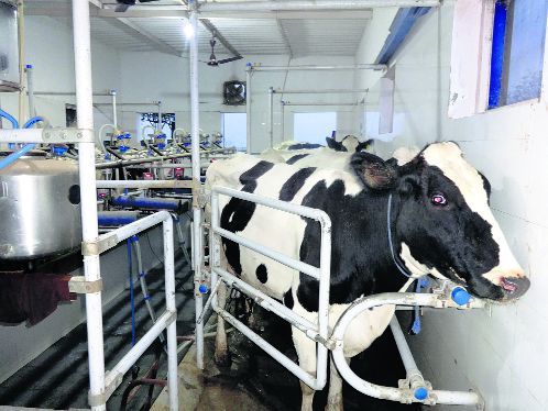 The dairy way, tried and tested