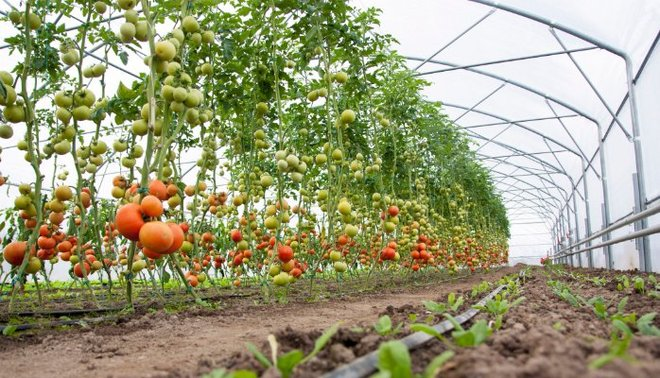 Horticulture research institute yet to see light of day