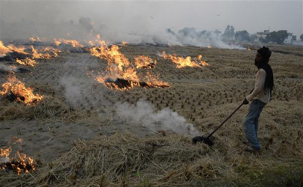 Early harvest, labour unavailability due to pandemic led to more farm fires this time, say officials