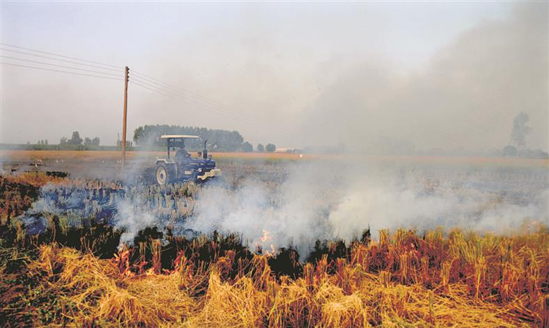 More farm fires due to early harvest: Experts