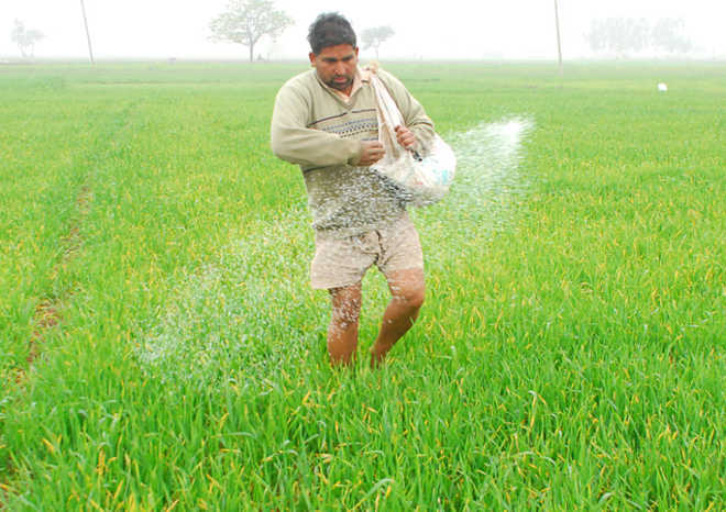 DAP fertiliser rates increased, farmers rue move would further inflate input cost