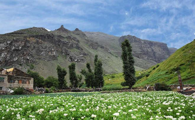 39 in Spiti valley test positive for virus