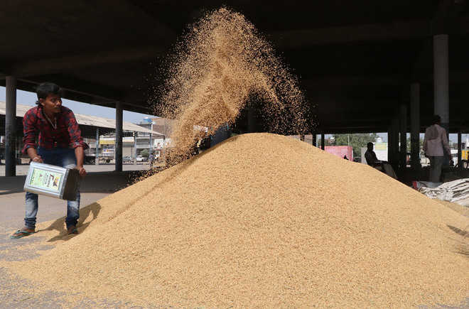 Traders buying paddy from UP, selling it in Punjab mandis