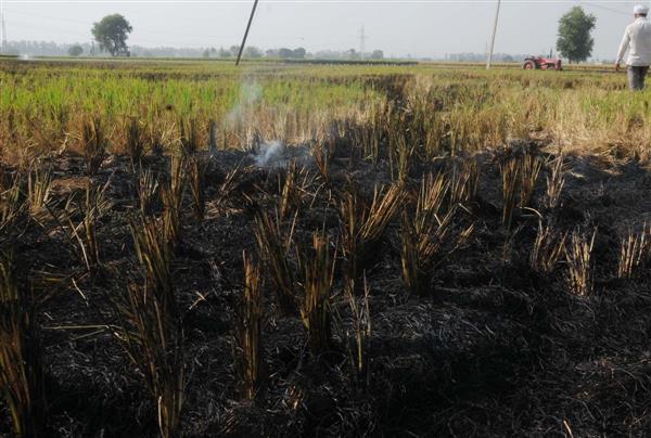 120 farm fires in a day, air quality dips