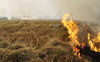 Stubble burning: 25 FIRs registered in Mansa; farmers demand immediate cancellation