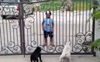 Two canines watch Sikh boy's 'Bhangra' moves; video leaves netizens amused