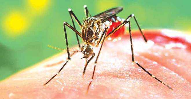 Patiala district reports 40 dengue cases