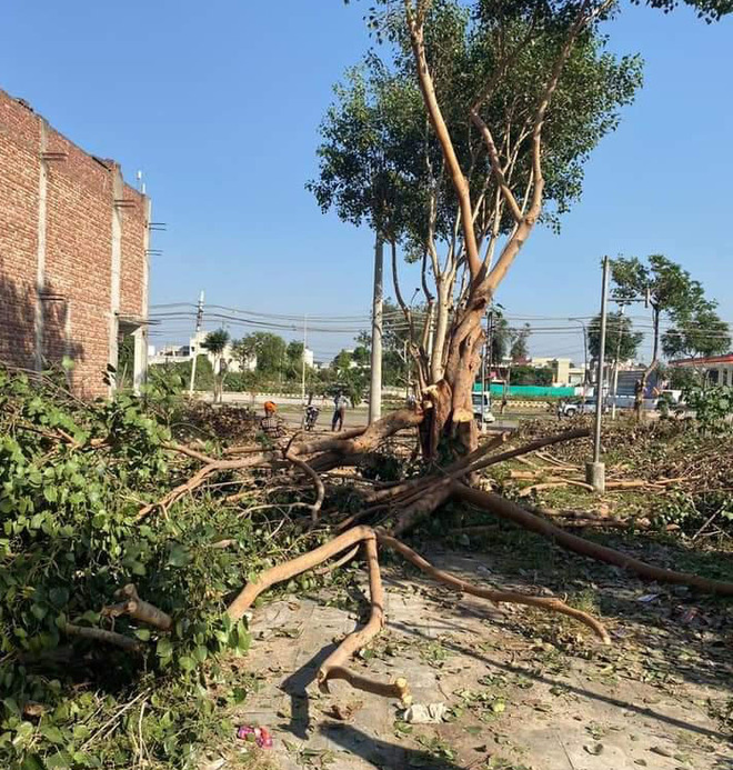 Illegal cutting of trees goes unchecked