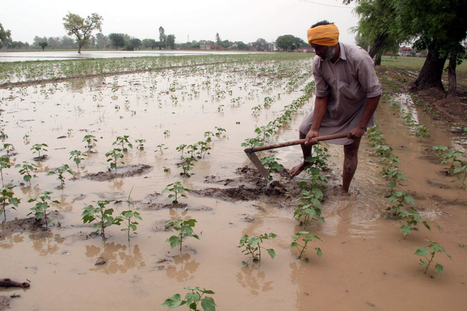 Farmers cultivating land for 12 years to get ownership right