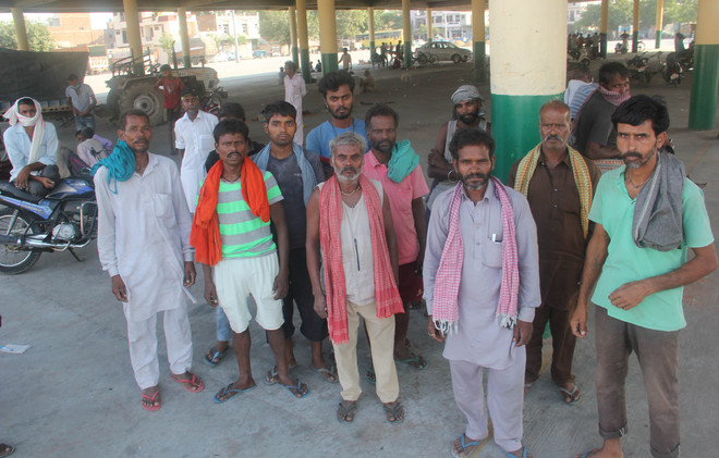 Farmers cheer as Covid-hit labourers return for harvest