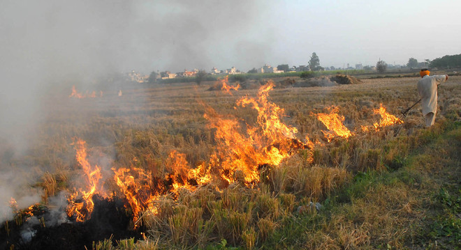 Malwa records fewer stubble-burning cases than Majha