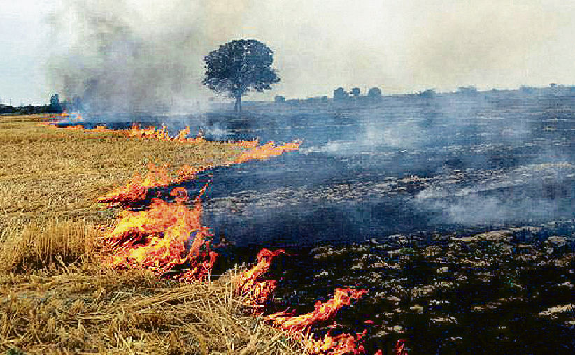 Bathinda varsity looks for alternative to farm fires