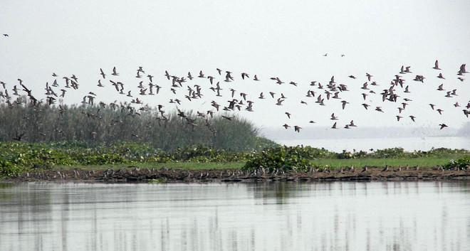 Chamba residents demand bird watcher park near temple