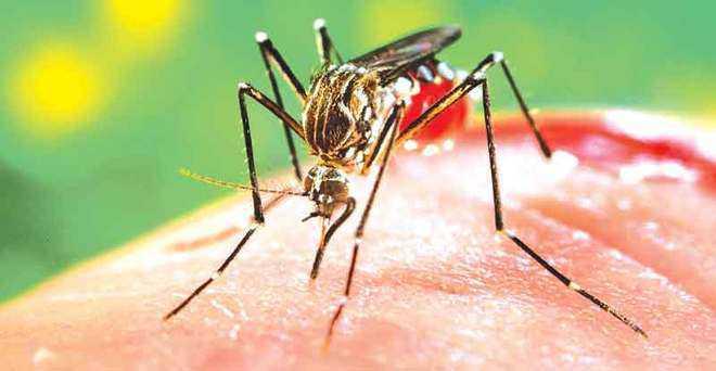 Take precautions against dengue, Patiala residents told