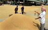 Paddy procurement begins in Fatehgarh Sahib