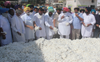 CCI begins procurement, Bathinda cotton growers lament low price