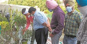 Health officials gear up as dengue cases see rapid rise in Patiala