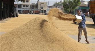 Paddy procurement touches record high of 83,000 MT