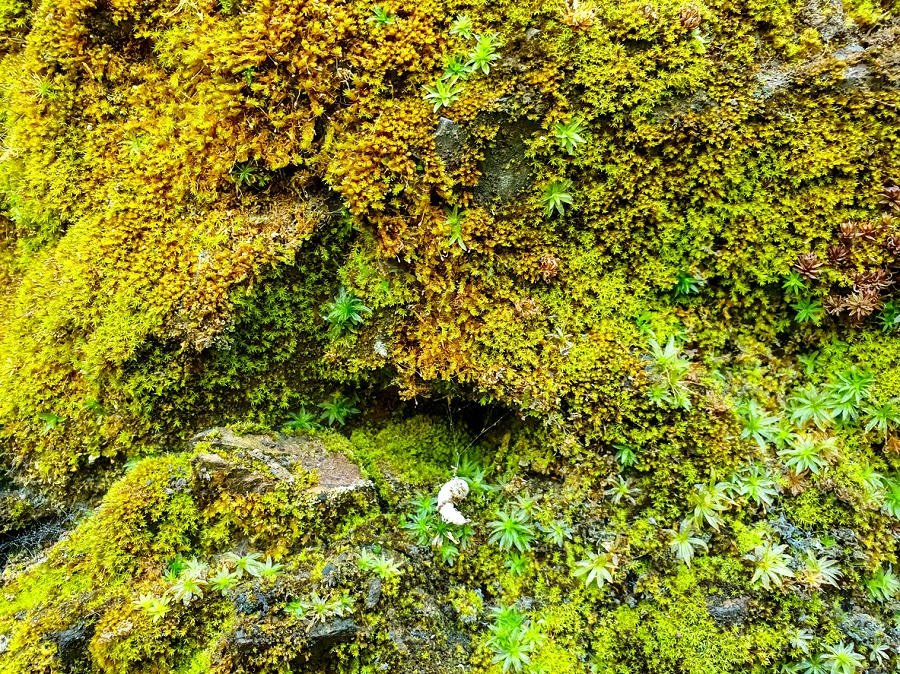 India's first moss garden comes up near Nainital