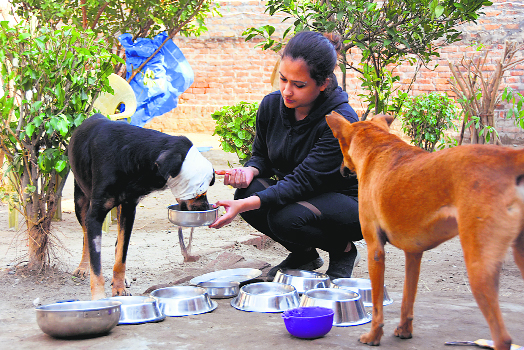 Stray at Home: The pariah dogs are finding acceptance