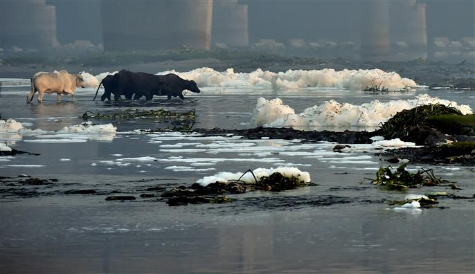 Frothing in Yamuna: Detergents in untapped sewage major reason