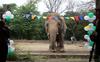 'World's loneliest elephant' Kaavan starts trip to Cambodia