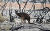 4,400 species globally facing threats from changes in wildfires