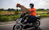Biker dog Bogie thrills fans as he cruises Philippine highways