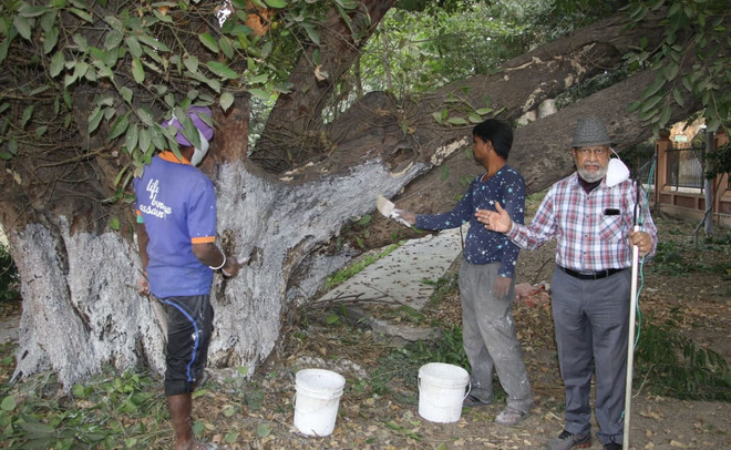 Noted environmentalist starts treatment of trees at Ram Bagh