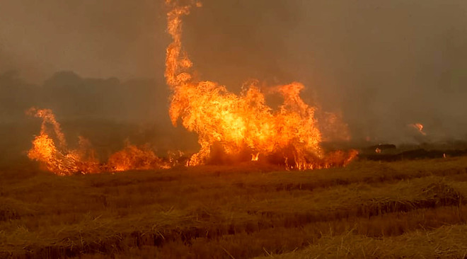 Over 30,000 farm fires in Punjab, air quality worsens