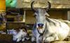 Farmers oppose animal tagging