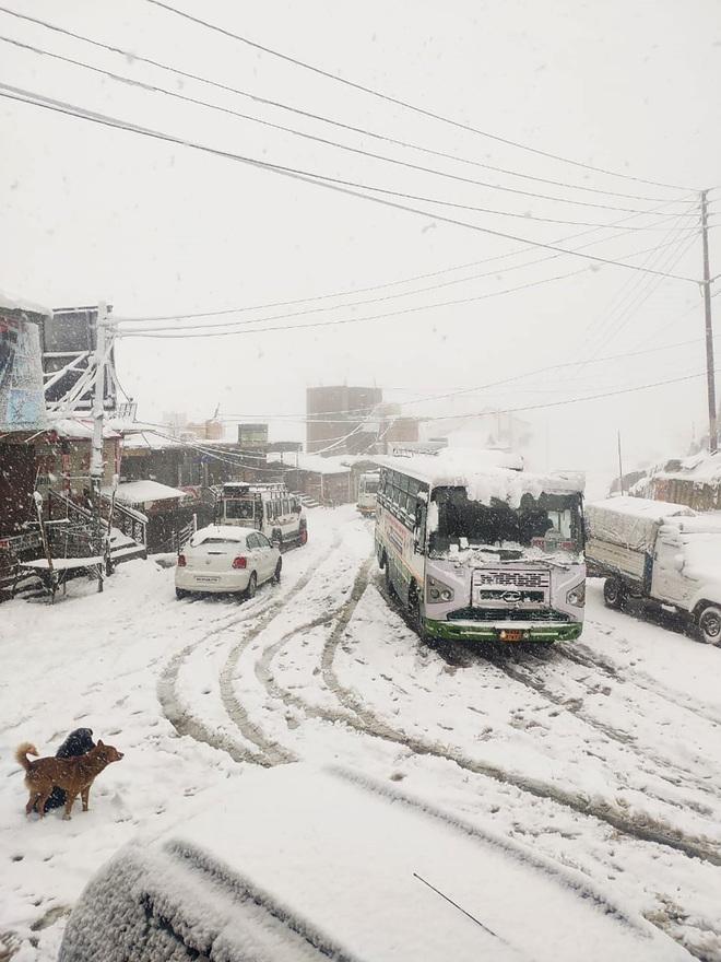 Snow in Shimla, Kufri, Mashobra