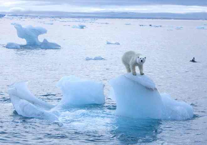 Arctic ice melt disrupting ocean current, may alter Europe's climate