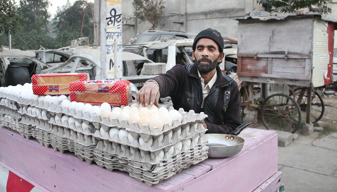 After Rs 2,500 cr loss, poultry industry looks to recovery