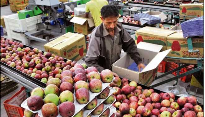 23,500 fruit growers  hit by hails, rain