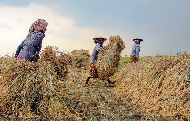Agriculture key to unlocking economic potential