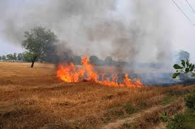 Punjab farmers resort to stubble burning, 84 cases reported so far