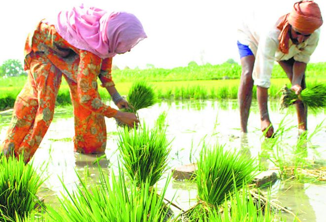 At 7K/acre, labour rates more than double in Punjab