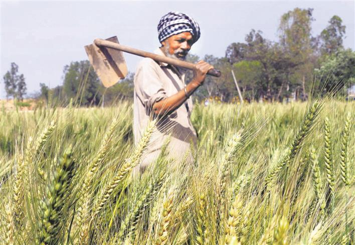 Local labourers demand double wages: Farmers