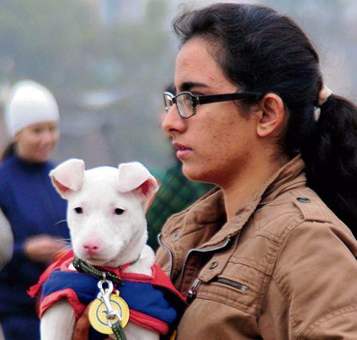 Ludhiana MC starts online pet registration