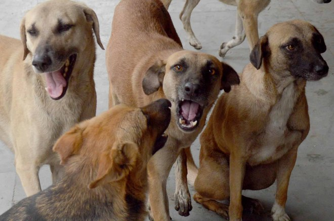 Film producer booked for letting loose his 5 dogs on Hyderabad police