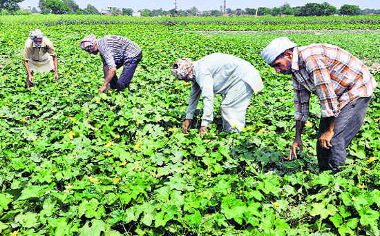 States advised to encourage agroforestry in contract farming on lines of crops right from pre-planting, planting and harvest