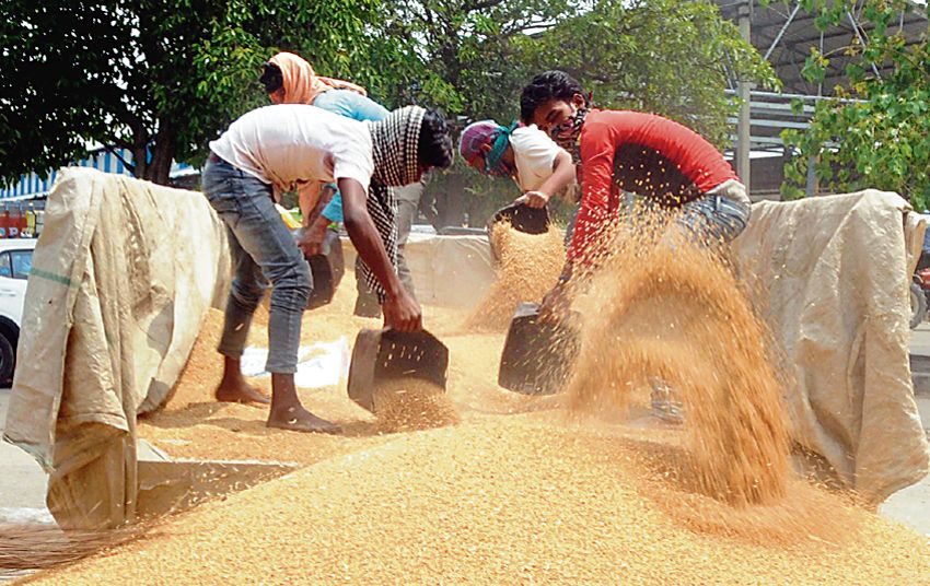 A case to make MSP legal right of farmers